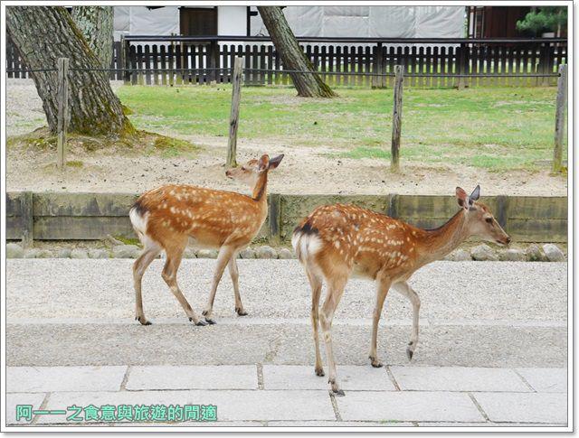 奈良.斑鳩一日卷.鹿.猿澤池.興福寺.五重塔image024