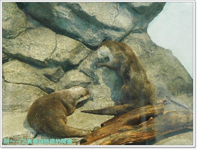 大阪旅遊.expocity.nifrel.海遊館.親子.動物園image047