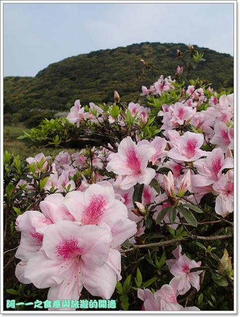 陽明山竹子湖海芋大屯自然公園櫻花杜鵑image019