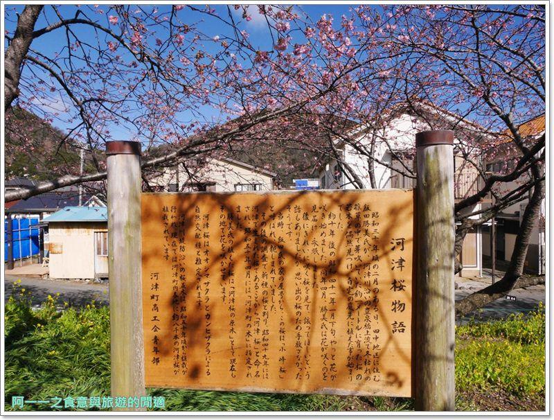 河津櫻.靜岡伊豆.日本自助旅遊.交通.攻略image021
