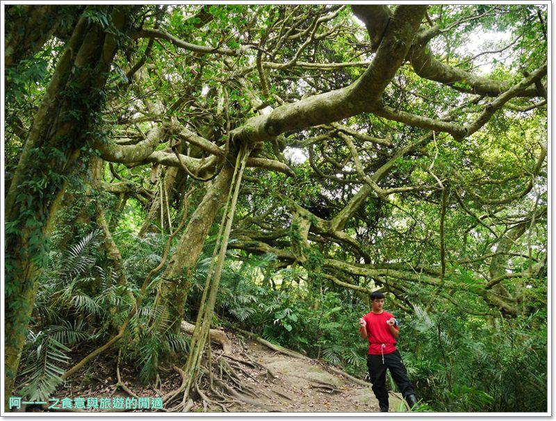 鸞山森林博物館.台東景點.祕境.會走路的樹.阿凡達image014
