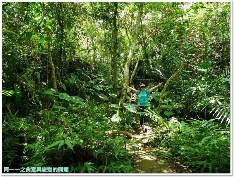 鸞山森林博物館.台東景點.祕境.會走路的樹.阿凡達image036