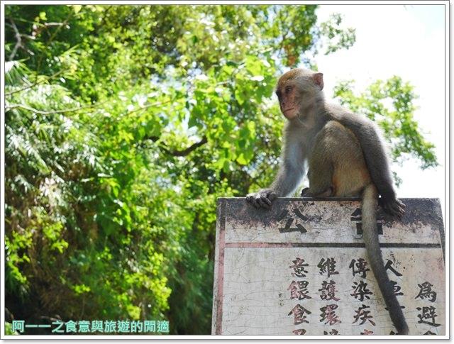 台東旅遊.泰源幽谷.登仙橋.台灣獼猴.東河橋.東部海岸image042