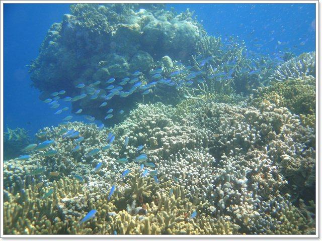 帛琉 愛來環礁KB斷層水道 浮潛~阿一一帛琉藍色海洋之旅