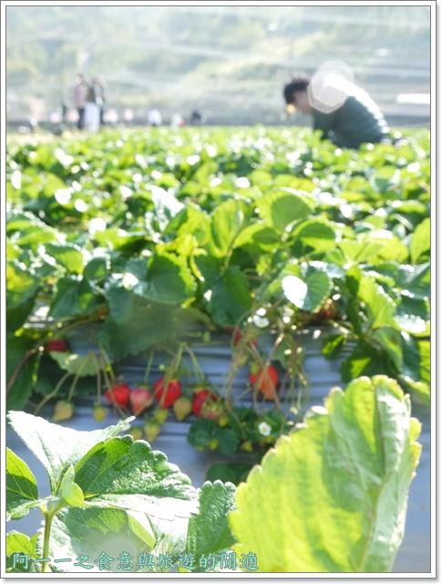 苗栗大湖草莓酒莊花間集image025