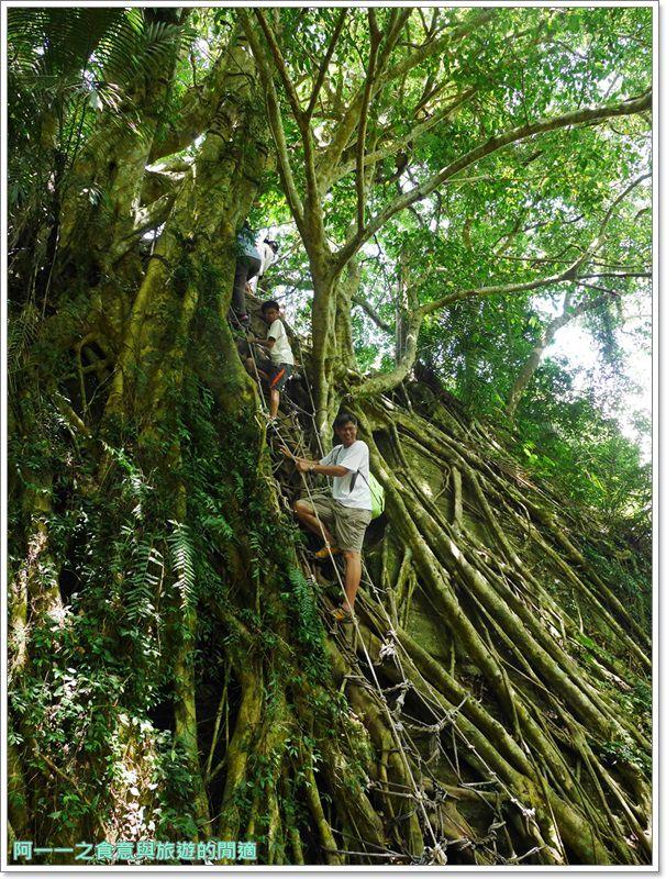 鸞山森林博物館.台東景點.祕境.會走路的樹.阿凡達image041
