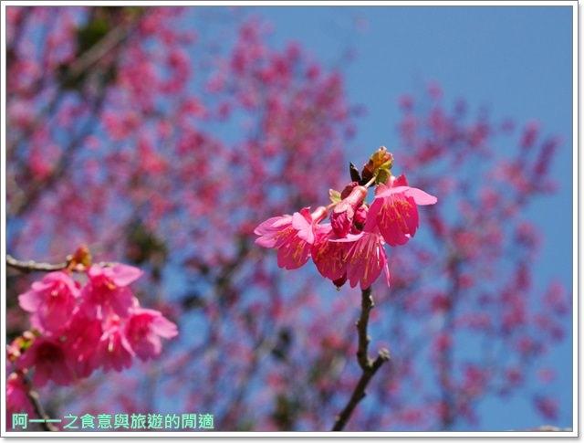 台東美食景點初鹿牧場初鹿鮮乳鮮奶櫻花祭放山雞伴手禮image029