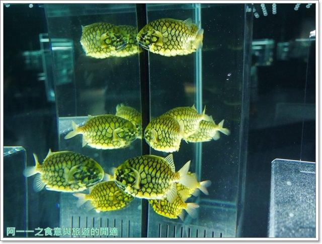 大阪旅遊.expocity.nifrel.海遊館.親子.動物園image026