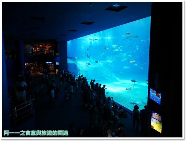 沖繩美麗海水族館.海洋博紀念公園.海豚秀.親子旅遊image038