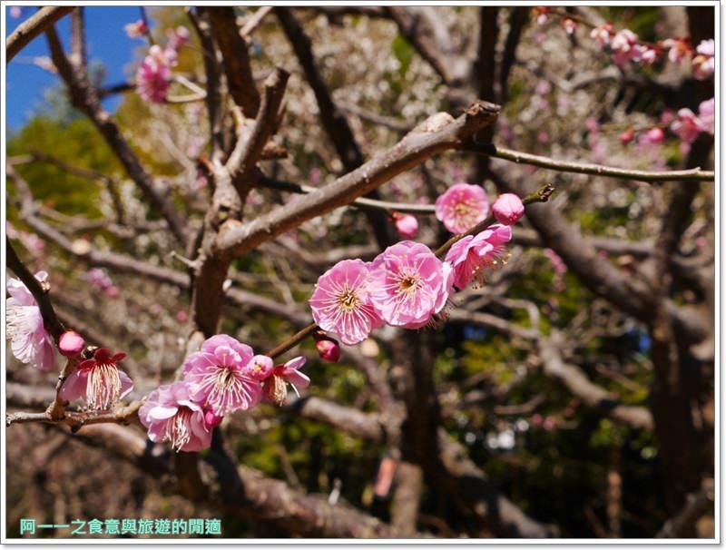 靜岡旅遊.熱海梅園.來宮站.賞花.梅花image031