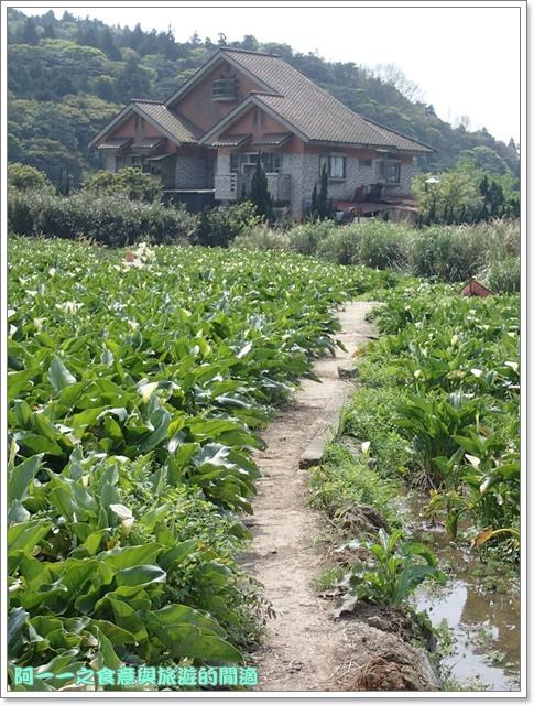 陽明山竹子湖海芋大屯自然公園櫻花杜鵑image081