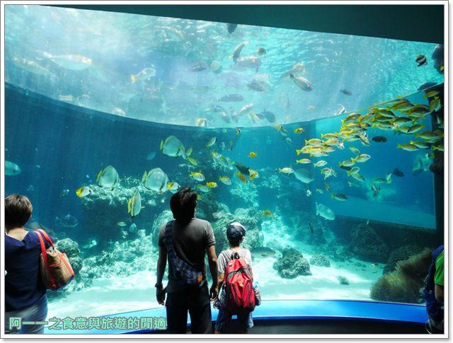 沖繩美麗海水族館.海洋博紀念公園.海豚秀.親子旅遊image025