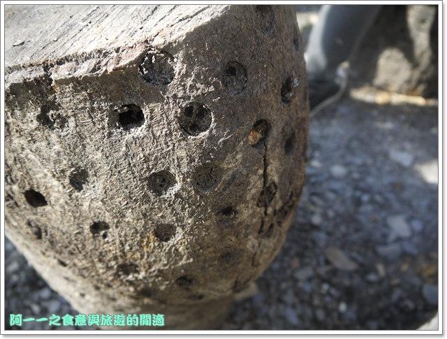南投武界段木香菇一線天image017