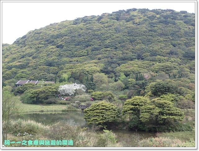 陽明山竹子湖海芋大屯自然公園櫻花杜鵑image023