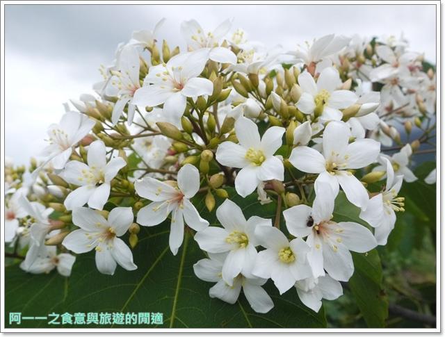 花蓮吉安中園桐花步道鬱金香花園image023