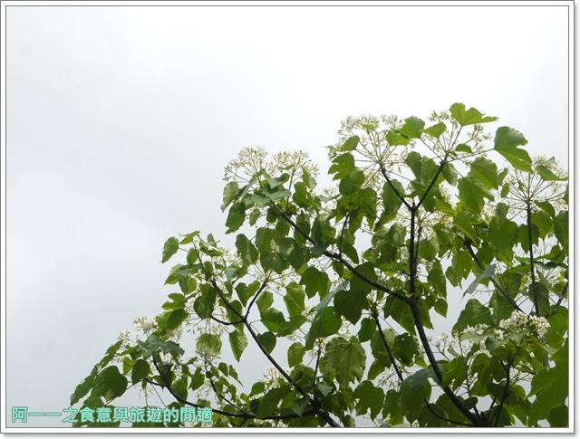 花蓮吉安中園桐花步道鬱金香花園image011