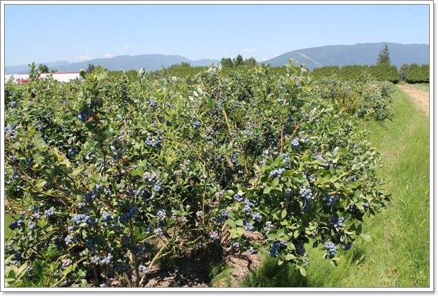 RIC水果行加拿大進口雪國農場天然果乾伴手禮零嘴image010
