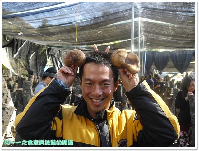 南投武界段木香菇一線天image033