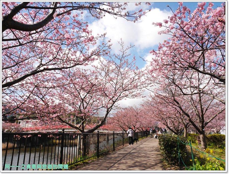 河津櫻.靜岡伊豆.日本自助旅遊.交通.攻略image019