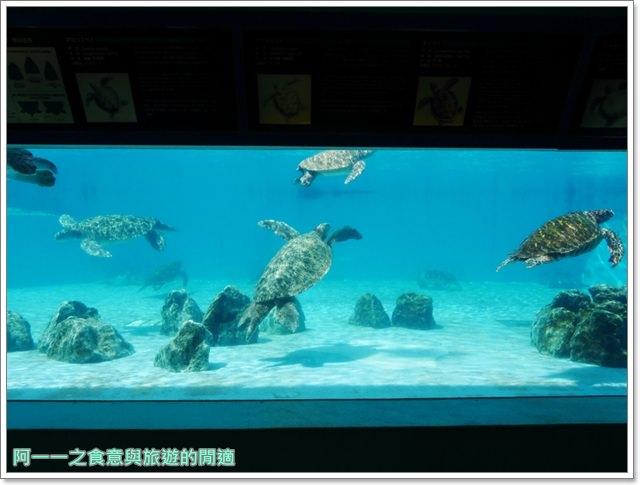 沖繩美麗海水族館.海洋博紀念公園.海豚秀.親子旅遊image068