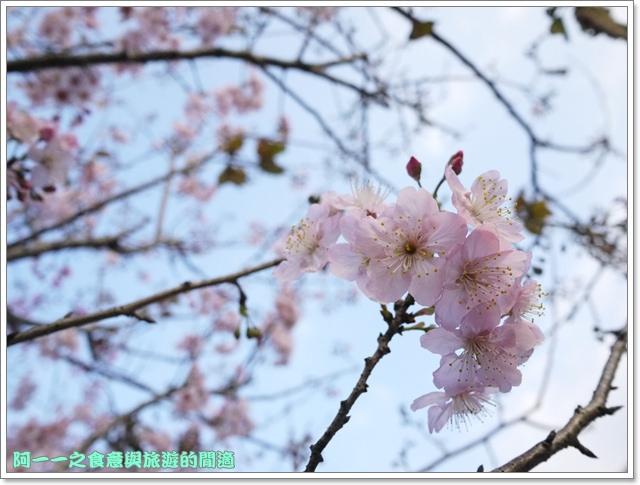image065桃園客家文化館櫻花