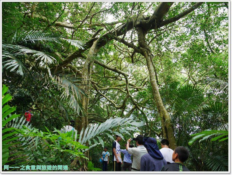 鸞山森林博物館.台東景點.祕境.會走路的樹.阿凡達image013