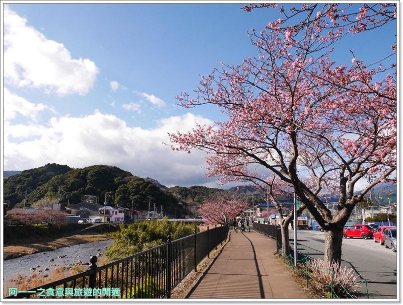 河津櫻.靜岡伊豆.日本自助旅遊.交通.攻略image032