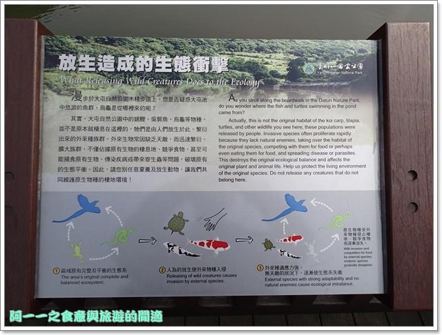 陽明山竹子湖海芋大屯自然公園櫻花杜鵑image033