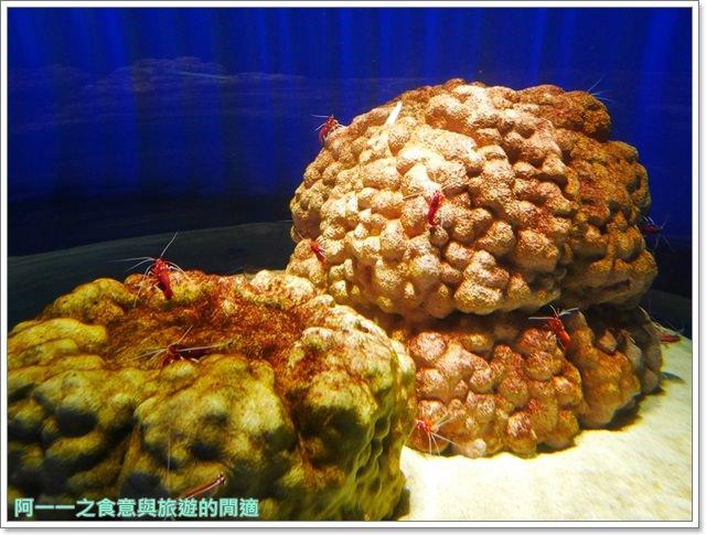 大阪旅遊.expocity.nifrel.海遊館.親子.動物園image009