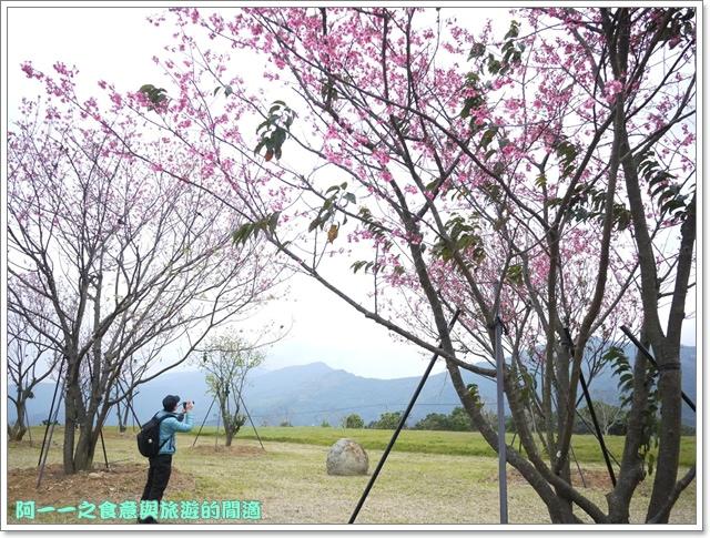 image051初鹿牧場櫻花