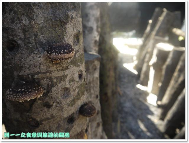 南投武界段木香菇一線天image019