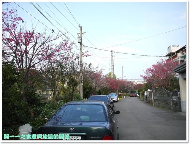 image059桃園客家文化館櫻花