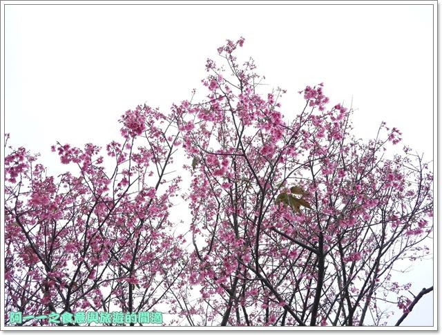 image053初鹿牧場櫻花