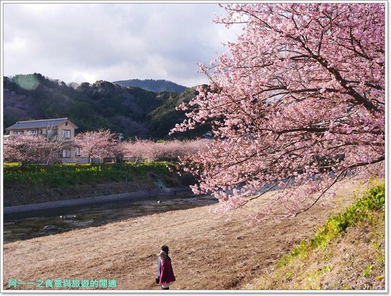 河津櫻.靜岡伊豆.日本自助旅遊.交通.攻略image064