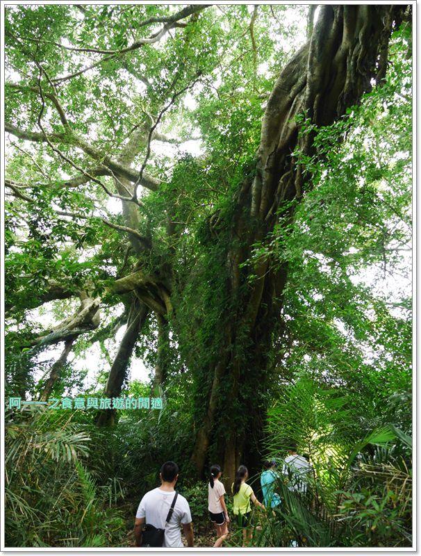 鸞山森林博物館.台東景點.祕境.會走路的樹.阿凡達image011