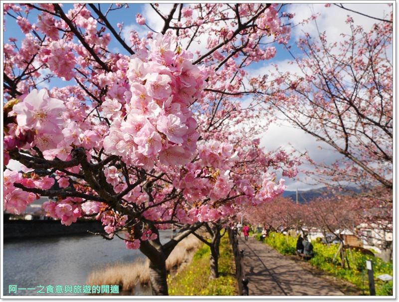 河津櫻.靜岡伊豆.日本自助旅遊.交通.攻略image025