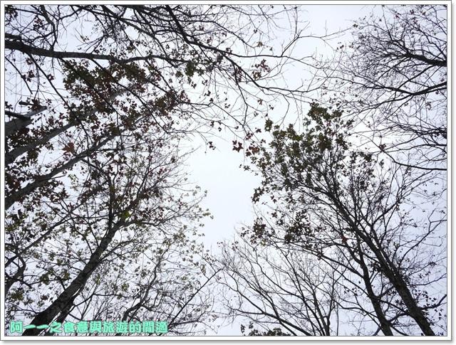 image007初鹿牧場櫻花