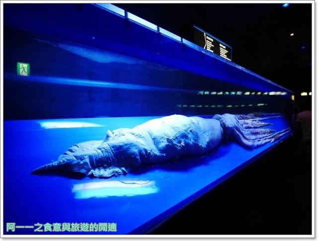 沖繩美麗海水族館.海洋博紀念公園.海豚秀.親子旅遊image058