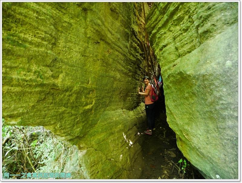 鸞山森林博物館.台東景點.祕境.會走路的樹.阿凡達image038