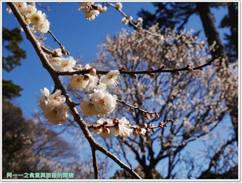 靜岡旅遊.熱海梅園.來宮站.賞花.梅花image068