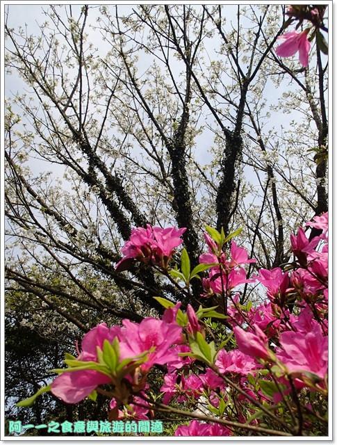 陽明山竹子湖海芋大屯自然公園櫻花杜鵑image039