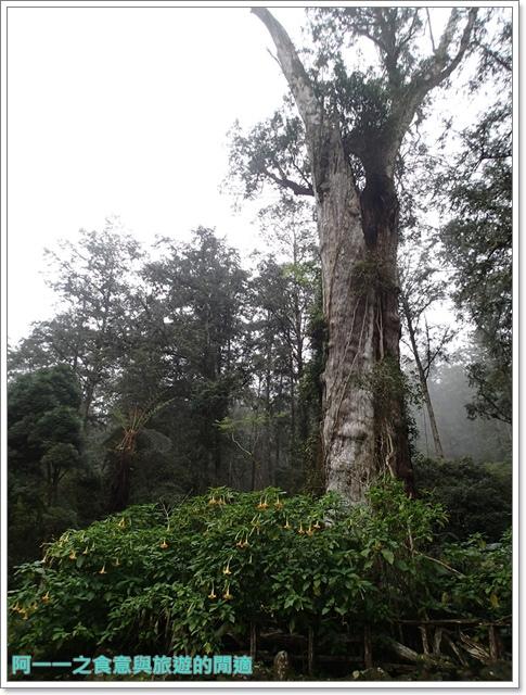 南投溪頭自然教育園區台大image065