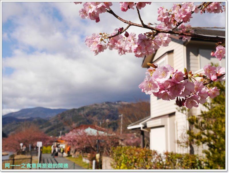 河津櫻.靜岡伊豆.日本自助旅遊.交通.攻略image038