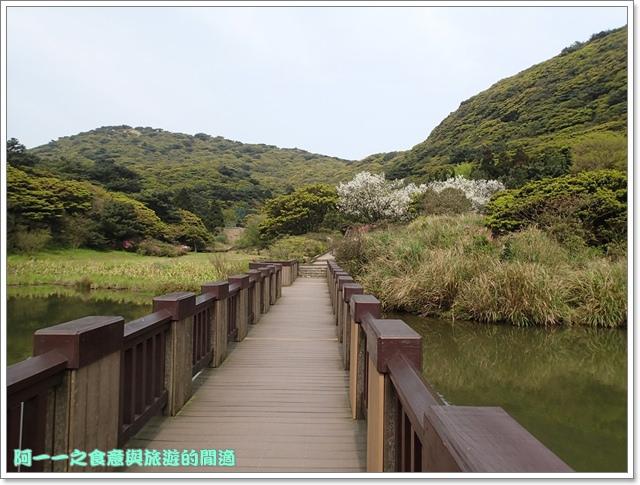 陽明山竹子湖海芋大屯自然公園櫻花杜鵑image027