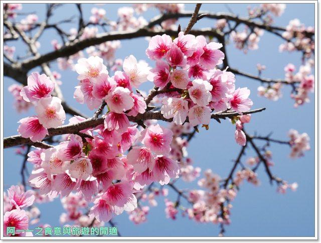 台東美食景點初鹿牧場初鹿鮮乳鮮奶櫻花祭放山雞伴手禮image023