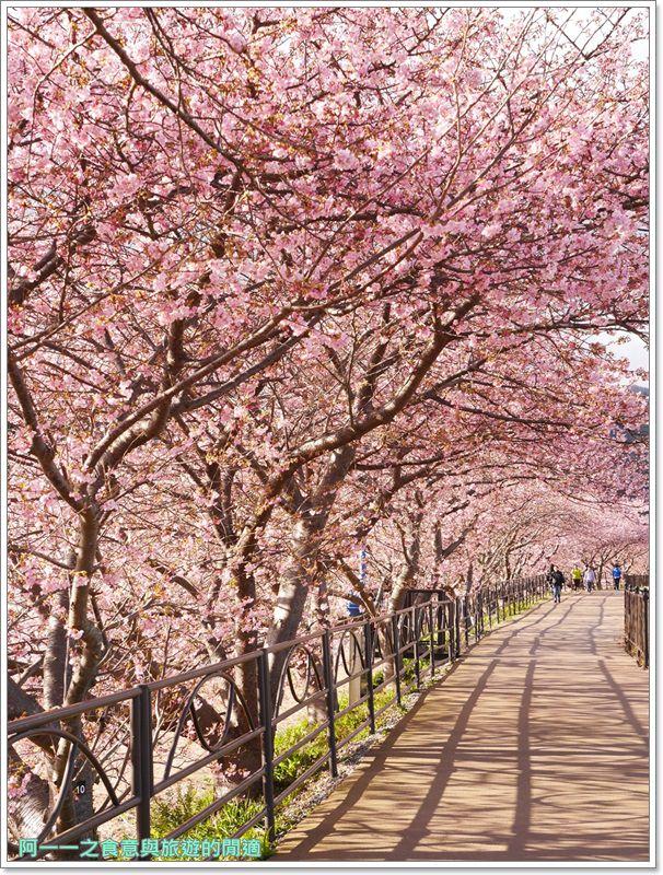 河津櫻.靜岡伊豆.日本自助旅遊.交通.攻略image065