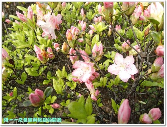 陽明山竹子湖海芋大屯自然公園櫻花杜鵑image021
