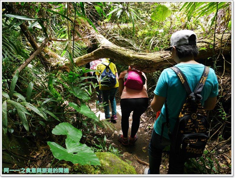 鸞山森林博物館.台東景點.祕境.會走路的樹.阿凡達image034