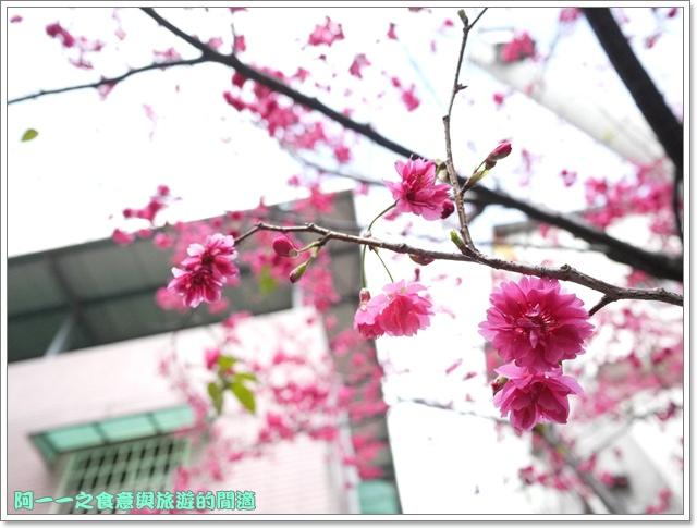 image085桃園客家文化館櫻花