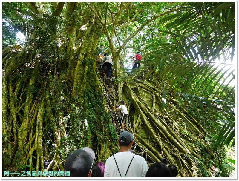 鸞山森林博物館.台東景點.祕境.會走路的樹.阿凡達image003